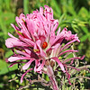 Indian Paint Brush & Lady Bug (16-1)