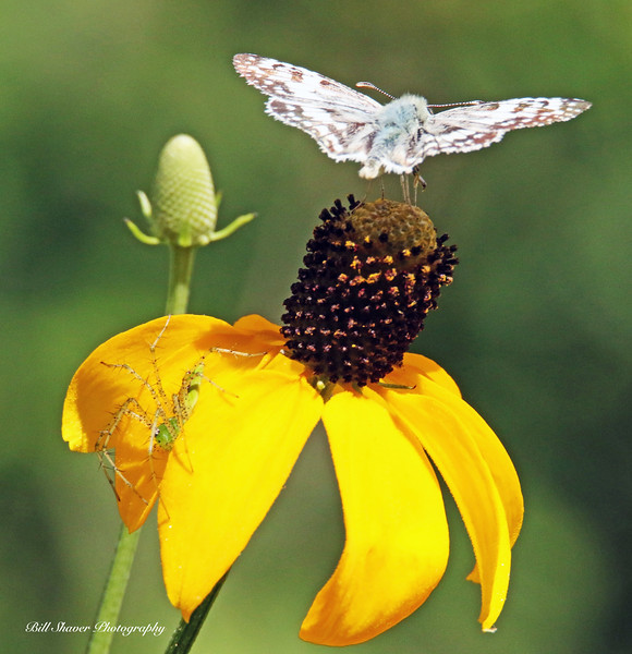Butterfly & Spider