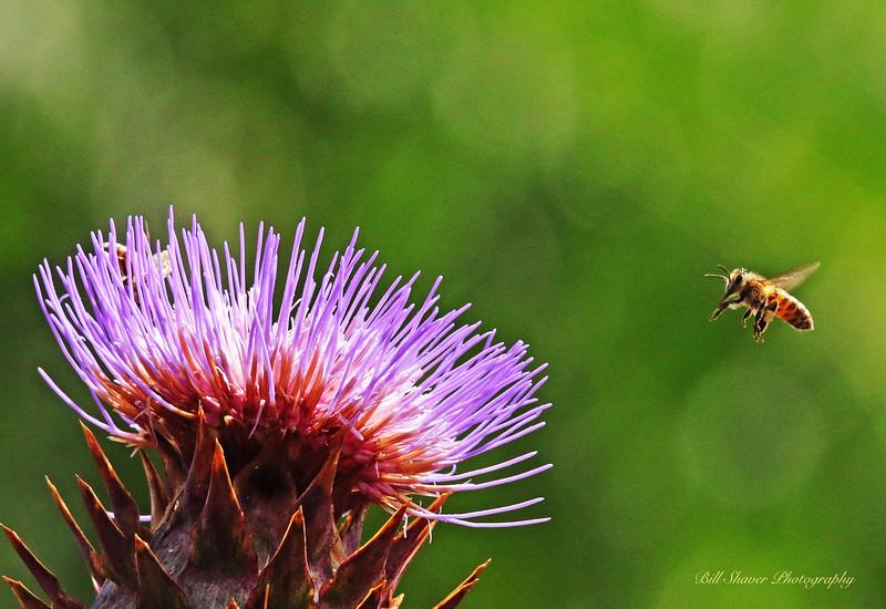 Bee & Artichoke flower