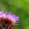 Bee & Artichoke flower
