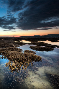 Corals during low tide