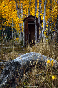 Autumn Aspen Shithouse