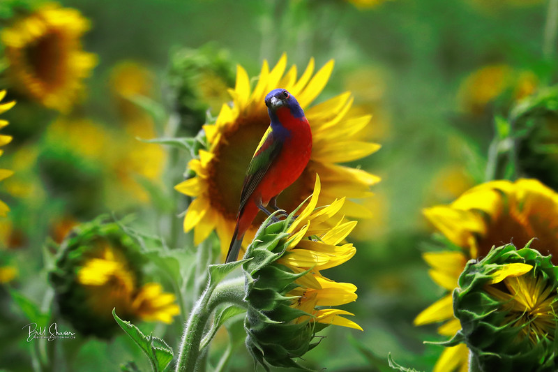 A Summer Breeze on Painted Flowers