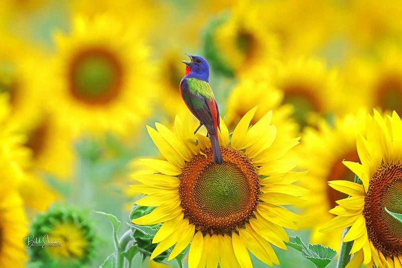 Rainbow & Sunshine - Bunting on Sunflower
