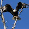 Eagle Landing - Lake Waco