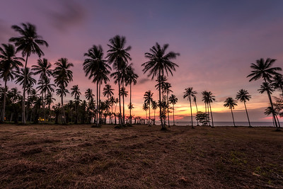 Tropical Sunset Palm Trees Sea Beach