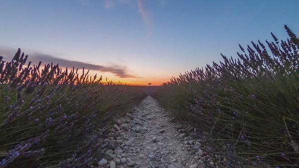 Valensole, Timelapse of Lavander field at sunset