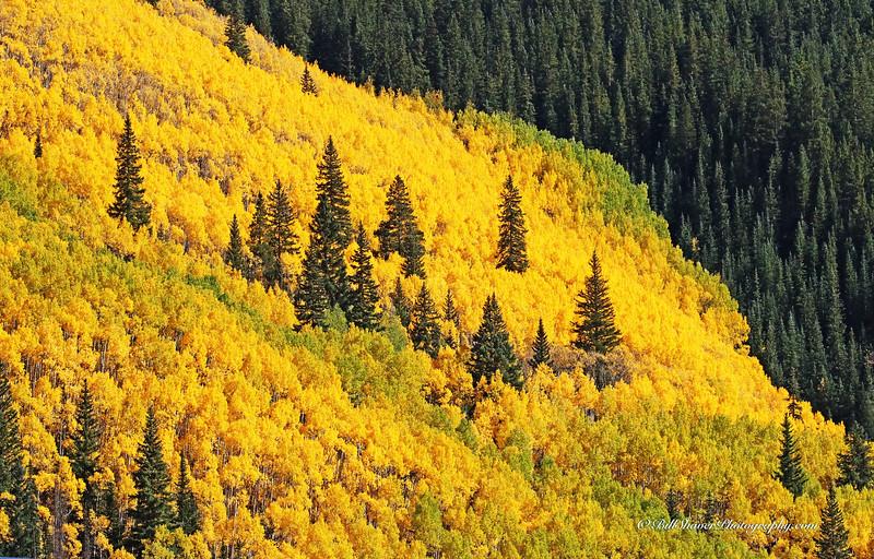 Changing Colors Colorado (10)