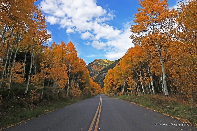 Changing Colors Colorado (20)