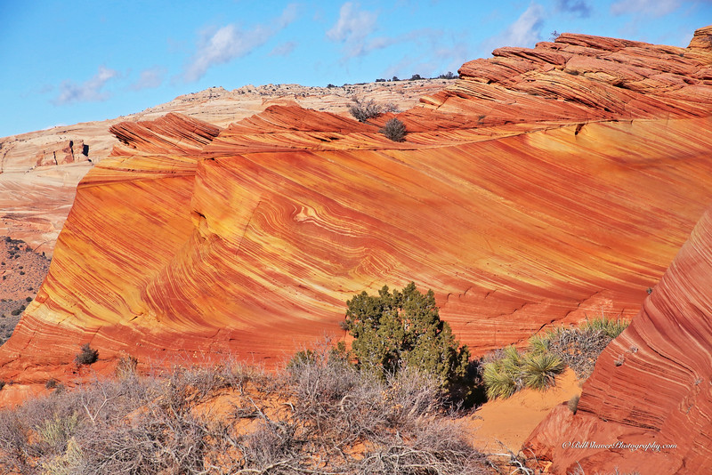The WAVE in Coyote Buttes, Utah  12