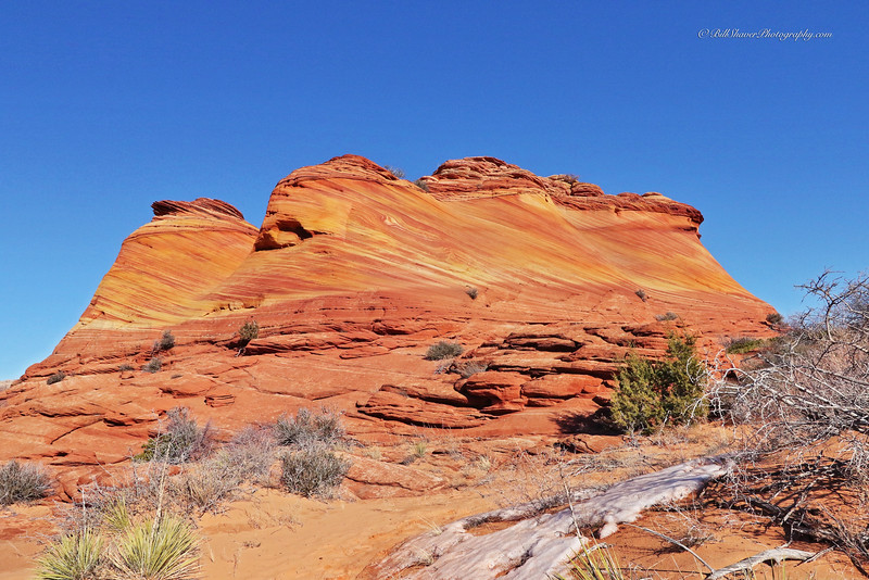 The WAVE in Coyote Buttes, Utah  8