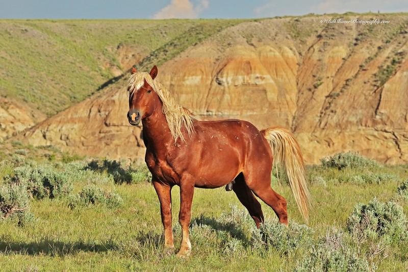 Wild Mustang - Wyoming - 9