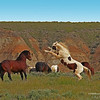 Fighting Mustangs - Wyoming - 3