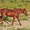 Wild Mustang - Wyoming - 7