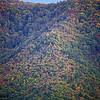 Fall Colors - Cade's Cove - Smokey Mountains (2)
