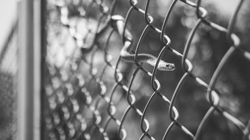 SNAKE IN THE FENCE