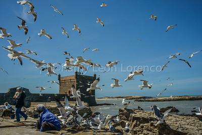Essaouira 2013-Flyng breakfast