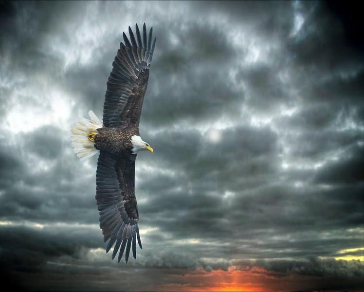 American Eagle Wyoming Minnesota