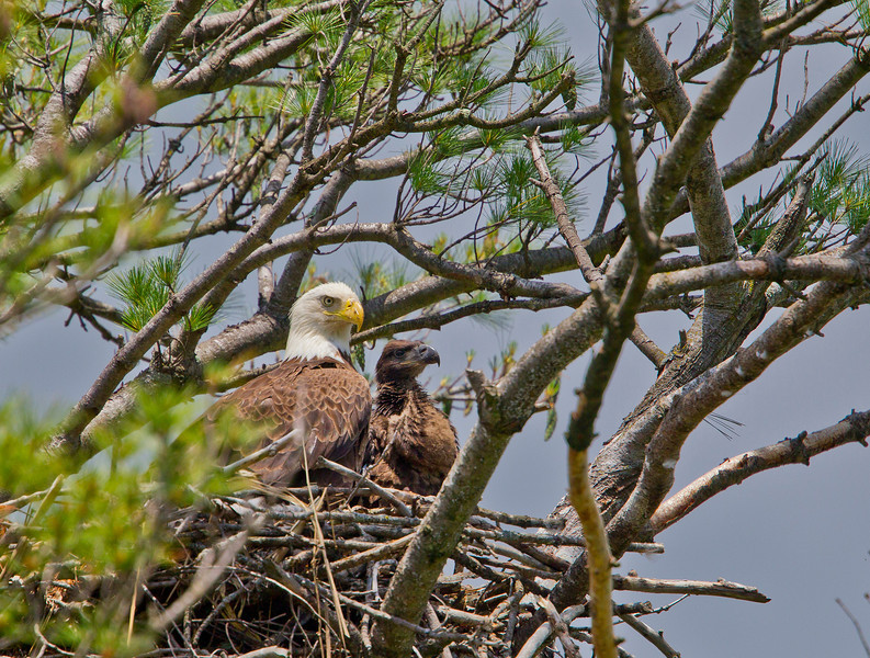 Marine on the St Croix Eagle with parent