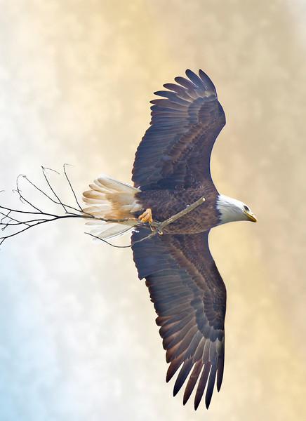 Marine on the St Croix Eagle