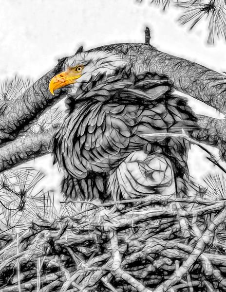 Funky Eagle