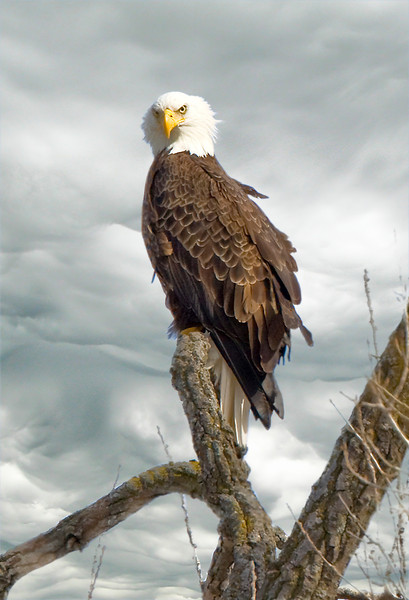 Wyoming Mn. Eagle
