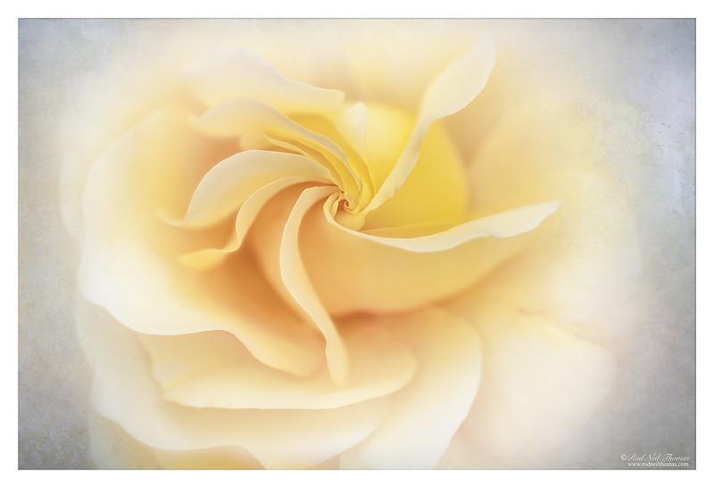 The Fragrance Of Light