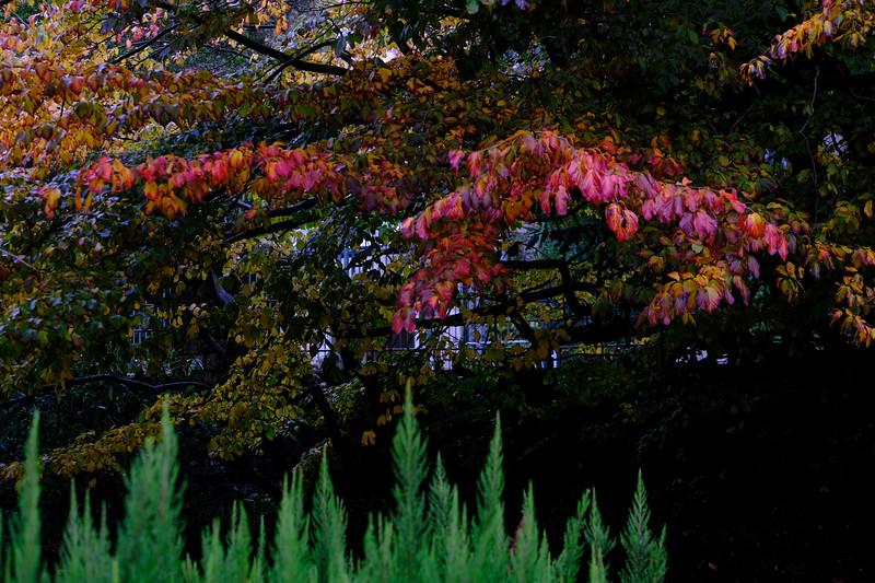 Upper Gardens, Bournemouth, Dorset