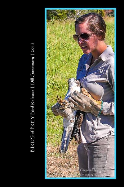 BIRDS of PREY BIRD RELEASE