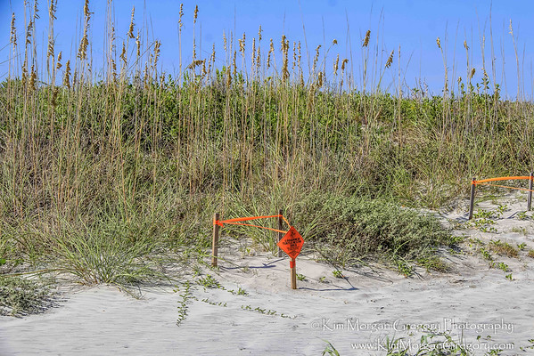 LOGGERHEAD TURTLE NESTS