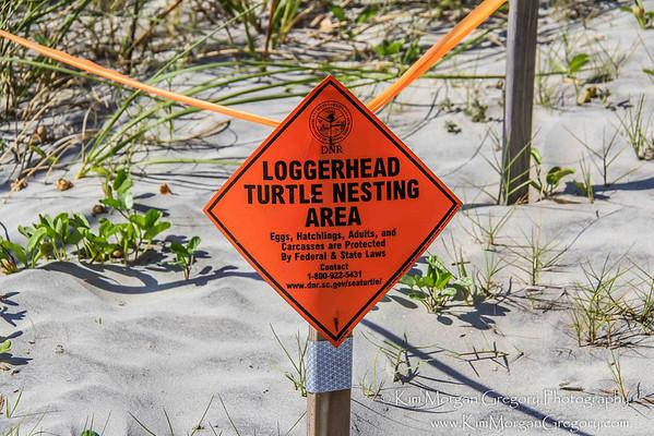 LOGGERHEAD TURTLE NESTS