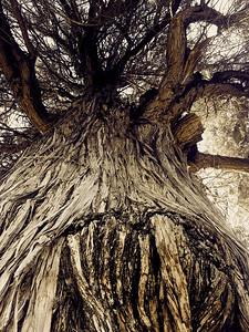 Alysia Nichols, Clawing Tree, 2018