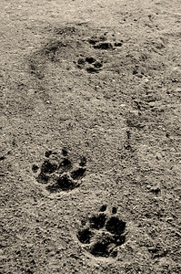 Lucas Angell, Paw Prints, 2018