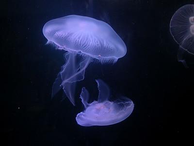 Oceanarium - Bournemouth
