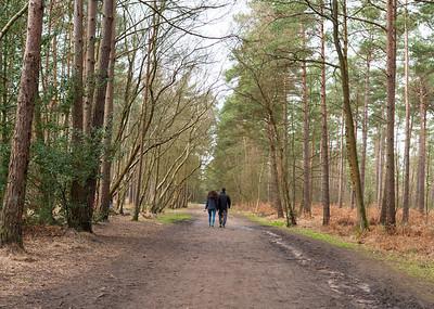 Couple on a walk in Swinley forest