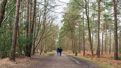 Happy couple walking in Swinley Forest, Bracknell