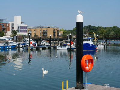 Seagull sitting on the pole in Lymington Quay