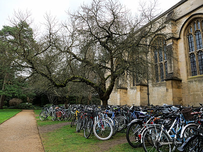 Tree and parked bicycles
