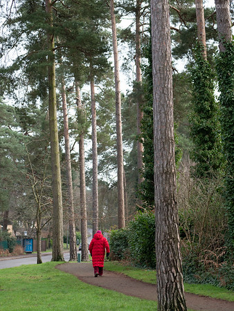 Walk Your Way to Fitness and Health