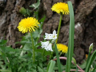 Yellow and white flowers: Spring time - Flowers, sunshine, happiness and action
