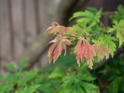 Why is the leaf changing colours so soon in summer