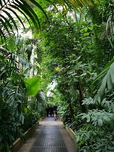Inside Palm House, Kew Gardens, London, UK