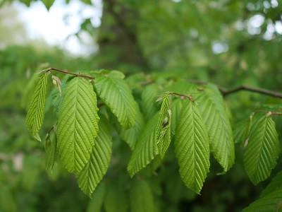 Vibrant green leaves