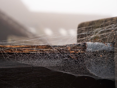Spider web on misty morning - water droplets