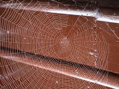 Spider web  on misty morning
