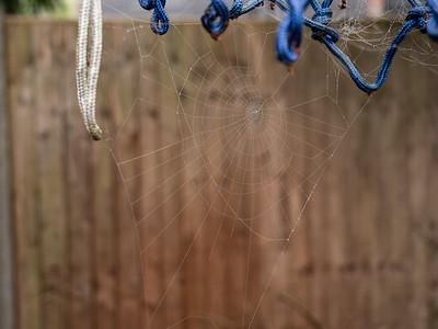 Wet spider cob web