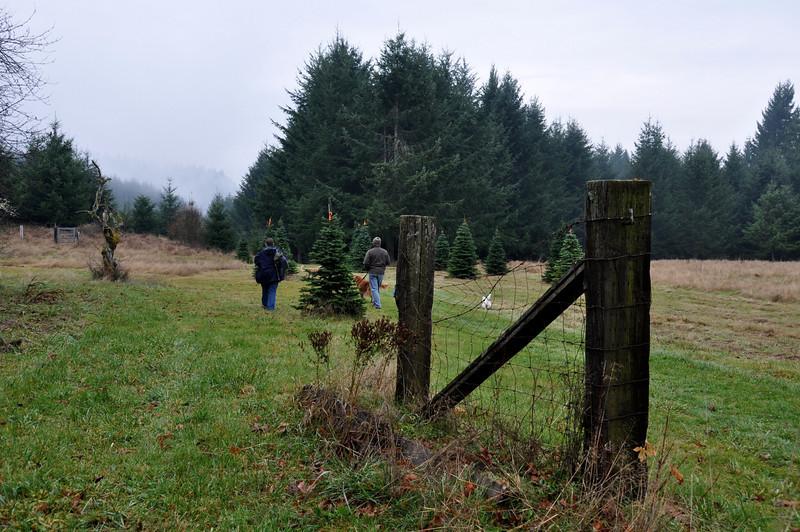 80 Acre Christmas Tree Farm, Buxton, Oregon