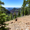 The trail follows the rim for ~2+ miles then turns inland for another ~2+ miles before reaching Widforss Point 7900ft.
