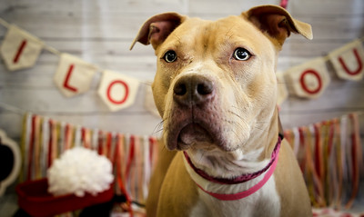 Rosie ID#54364 is a 3 year old Pit Bull mix. She is laid back and very curious. She likes toys and affection, and is ready for some love.