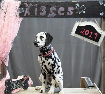 GDU Kissing Booth 2019-20